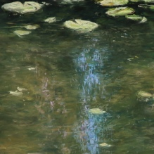 Waterlilies With Reflections of Sky And Trees, Closeup