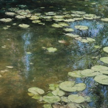 Waterlilies with reflections of sky and trees
